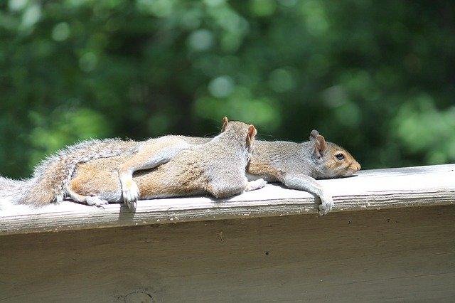 failure fatigue - Exhausted squirrels